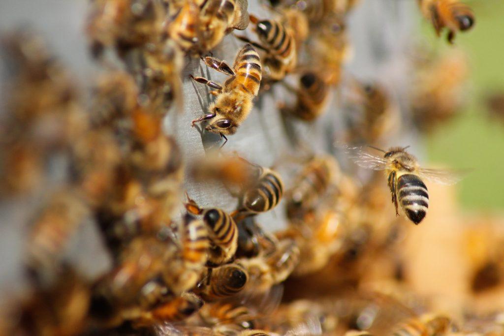 Durant la pandémie, la production de miel se porte à merveille - GlobalGoodness